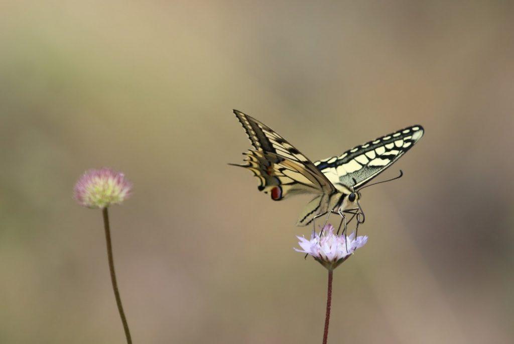 A linguagem pode ser fluida como o voar das borboletas
