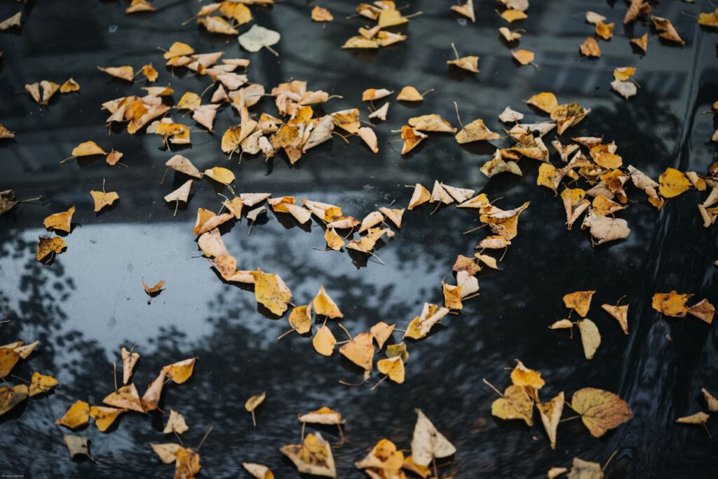 Desacelere | Amor… e outras diferenças